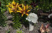 Hongos de jardín de hormigón