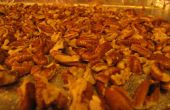 Increíble las pacanas tostadas