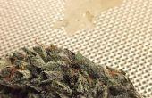 Como hacer resina (Extracto de Cannabis)