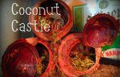 Cómo echar a perder tus cangrejos ermitaños: coco Castillo