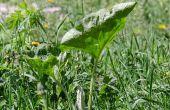 Uso de pellets de paja para mantener las malas hierbas de su jardín