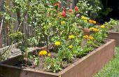 Cultivar hortalizas en tu patio trasero