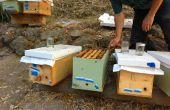 Como hacer una colonia de abejas del núcleo (y evitar establecido colmenas enjambre)