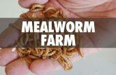 Granja del gusano de la harina
