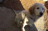 Cómo enseñar a tu perro a sentarse sin problemas