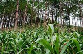 Agroforestales - agricultura integrada