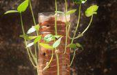 Vertical de jardinería en una botella!