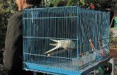 Hacer una mochila Birdy, a llevar un pájaro del animal doméstico (o dos). ¿