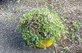 ¿Cómo girar molesto jardín las malas hierbas convertido en deliciosos huevos frescos