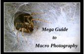 Mega guía de fotografía de Macro