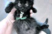 Arnés tolerado gato y gatito (suéter, no-coser versión)