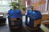 Plantadores de café puede