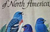 Una guía completa a la observación de aves