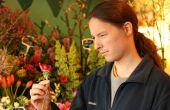 Guía de chico despistado a comprar flores