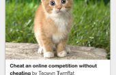 Cómo cuidar a un gatito pequeño