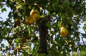 ¿Recogedor de fruta fuera de cosas tienes puesta alrededor de