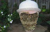 Salvar las abejas de la extinción! Lo puede hacer.