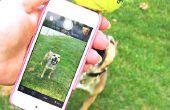 Selfie accesorio para perros