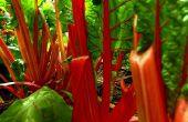 Verduras frescas-n-sabroso (en el invierno!)