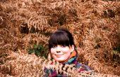Los bosques del cabo y colorido otoño