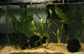 Aquascaping: el arte del jardín bajo el agua