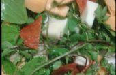 Haciendo la ensalada de las malas hierbas en su jardín.