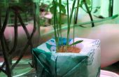 Crecer-bomba de plástico: hidroponía de bolsas de plástico