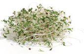 Fácil germinación para una alimentación sana y la diversión!