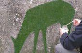 Cómo hacer Graffiti de musgo