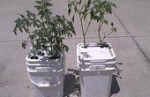 Cómo hacer un solo cubo agua auto regulado Jardinera de vegetales
