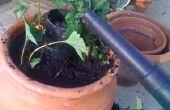 Plantador de la fresa de fácil riego