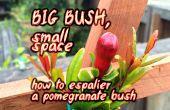 Arbusto grande, pequeño espacio ~ cómo pilares un arbusto Granada