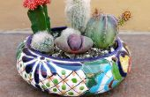 Cómo crear un jardín de cactus de plato y mantener su dedo de la espina dorsal libre