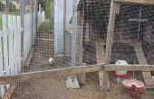 Aviario - cómo construir gallinero y aviario