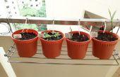 Inicio de riego por goteo de gravedad DIY para hierbas y plantas