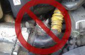 Deshacerse de un gato molesto del compartimiento del motor de su coche
