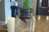 Mantener piscina Aquaponic - crecer hierba de trigo