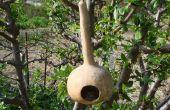 Comedero para pájaros de calabaza simple con una rama