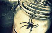 Araña Web linternas