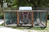 Agricultura urbana: Criar pollos de patio