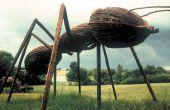Cómo conseguir librado de las hormigas (versión al aire libre)