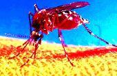 Mosquito Killing estanque - rápido y barato!