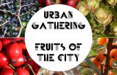 Encuentro urbano - frutas de la ciudad