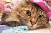 Patrón con AutoDesk Sketchbook Pro de ropa del animal doméstico