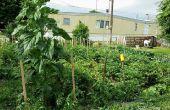 6 Hacks DIY vida para su jardín