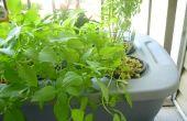 Soluciones a los problemas de cultivo hidropónico (falta de apoyo de planta de raíz)
