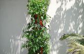 ¿Jardinera Vertical orgánico DIY