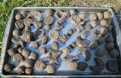 Cómo hacer un jardín instantáneo utilizando semilla bolas