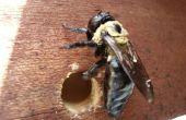 Hacer trampas de abeja carpintera