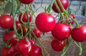 Contenedor de jardinería en balcón o espacio